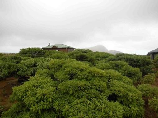 Millennium Forest, St Helena Island