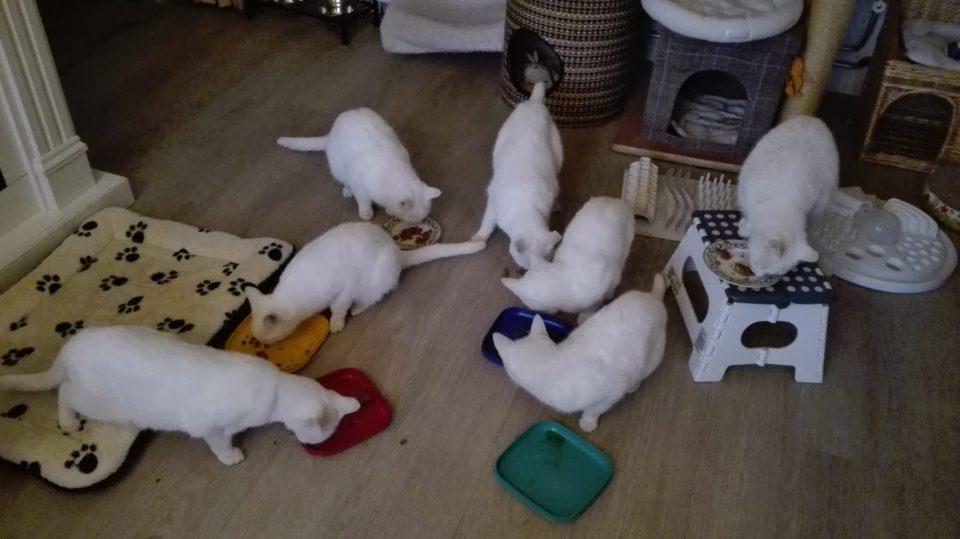 Onze Dove KattenSchatten