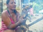 Een zorra chucha (Didelphis marsupialis) een buideldier dat het er niet levend van af heeft gebracht toen hij betrapt werd tijdens openbreken van een kippenhok