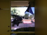 Commercial Window Tint office stripping 2121