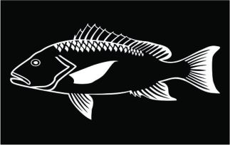 Red Snapper decal white