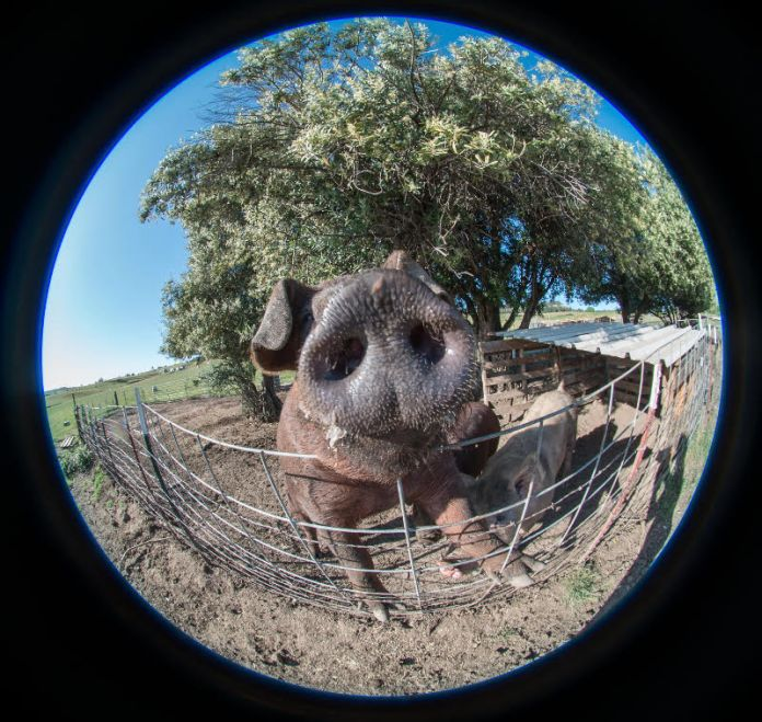 Rusty Fish-eye