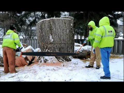Matt's Tree Service Stihl 090 chainsaw with 7foot bar
