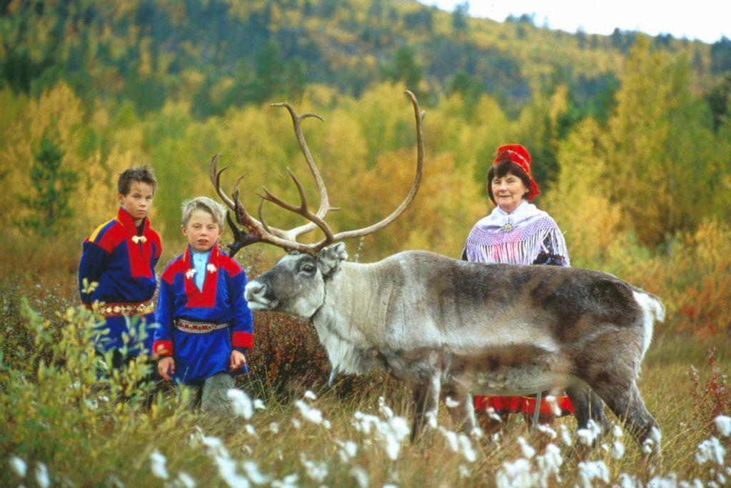 Reinsdyr på sommerbeite er et vanlig syn i nordnorge. Mange samer ønsker velkommen til egen sameleir.