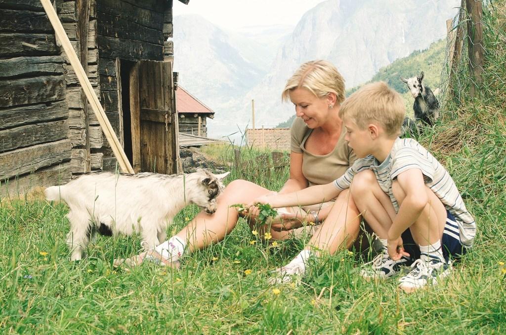 Ønsker du nærhet til husdyr er et besøk på en gård absolutt å anbefale for hele familien.