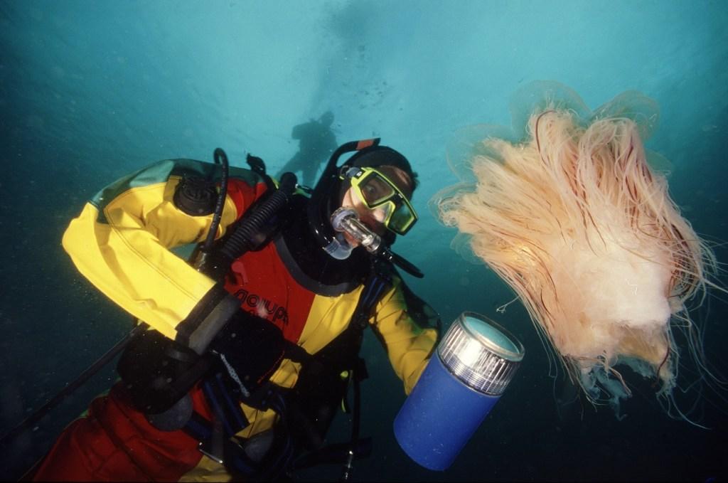 En dykker som lyser opp en manet med en kraftig lykt. Gir flotte farger.