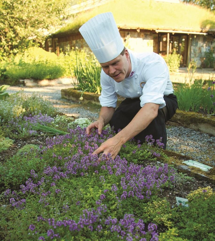 Kokk med kokkelue studerer avling av urteplanter på Hildurs Urterarium utenfor Brønnøysund.