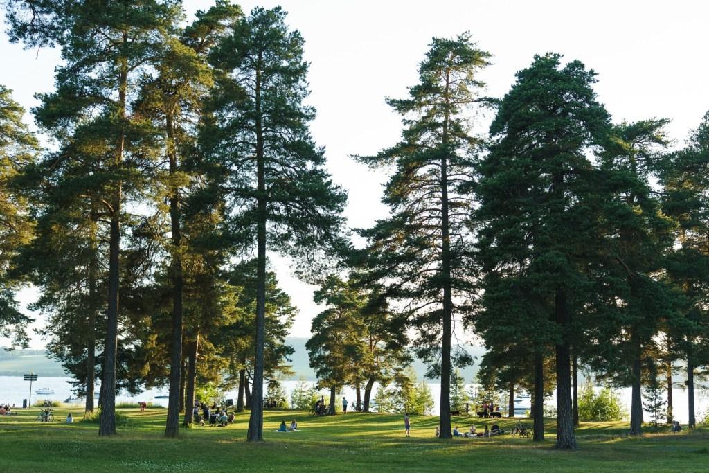 Parkområde Hamar med trær ned mot Mjøsa