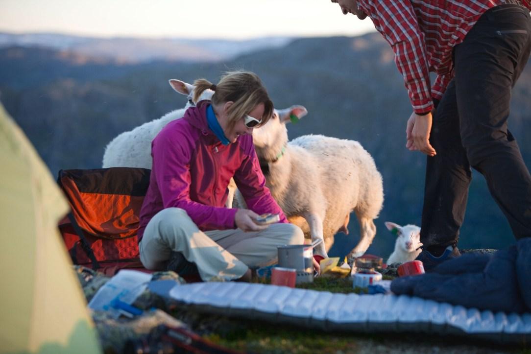 Par som raster i fjellet i Hemsedal mens de får besøk av nysgjerrige sauer