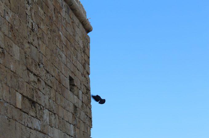 RAZGLEDNICE IZ PAFOSA / POSTCARDS FROM PAPHOS – JUST GO CYPRUS