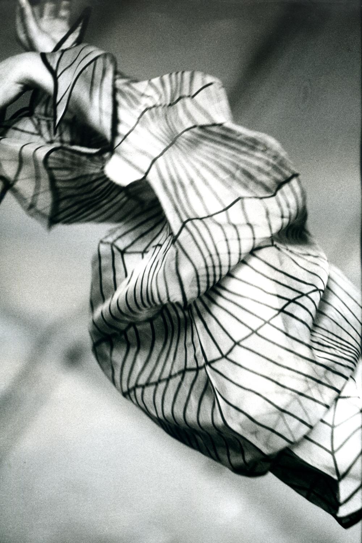 Stil-Stengel, Siebdruck auf Organza, Textilkunst
