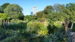 Boston, Summer, Sunday, Fenway