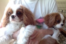 Puppy Bloggers