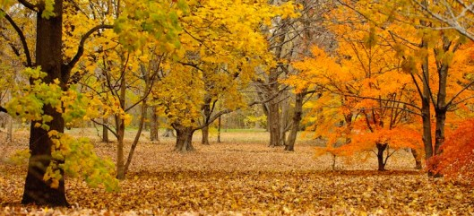 Fall, New England, writing, post-retreat blues, S. A. Young