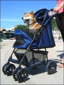 stroller, pet stroller, pets, Monday, S.A. Young