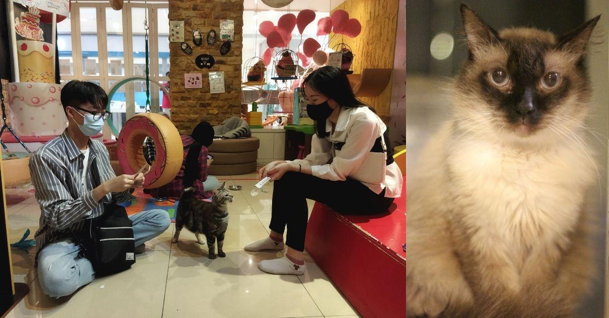 """Zijn RM200K-speeltuin zet geredde katten aan het werk als """"therapeuten"""" voor kinderen met speciale behoeften"""