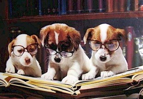 dogs reading ΦΙΛΟΖΩΙΚΟΣ ΣΥΛΛΟΓΟΣ ΦΘΙΩΤΙΔΑΣ ΠΕΡΙΦΕΡΕΙΑ ΣΤΕΡΕΑΣ ΕΛΛΑΔΑΣ ΛΑΜΙΑ ΖΩΟΦΙΛΙΑ 5ος ΔΙΕΘΝΗΣ ΛΟΓΟΤΕΧΝΙΚΟΣ ΔΙΑΓΩΝΙΣΜΟΣ ΖΩΟΦΙΛΙΑΣ