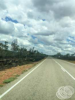 Burned section along the road