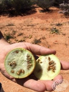 Here's one of those melons