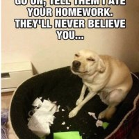 Yeah, Sure, Dog Ate Your Homework