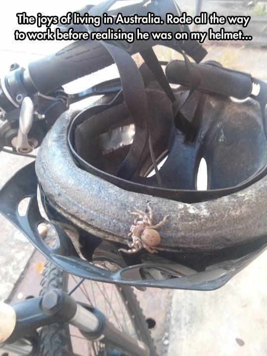 funny-spider-helmet-Australia-bike-1