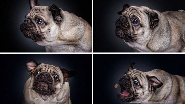 Hilarious Shots of Dogs Trying to Catch Treats