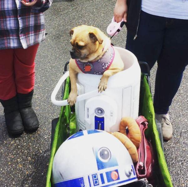 'Star Wars' Pug Parade