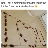 Nothing Says I Love You Better Than Cockroaches