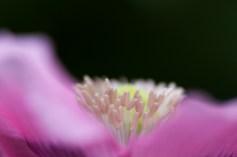 Garden-6108