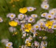 Flower-0477