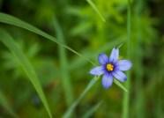 Flower-0499