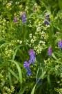 Flower-0523