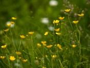 Flower-0526
