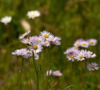 Flower-0535