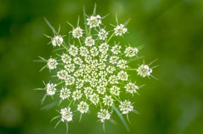Flowers-1423