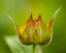 Flowers-1459