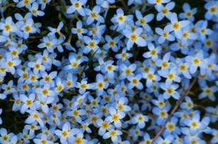 Spring-2463
