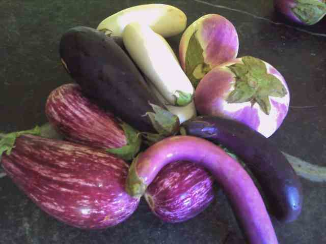 Zebra, Classic, Tango white, Rosa Bianca, Machiaw (skinny magenta)and Orient Express (skinny dark purple) Eggplants