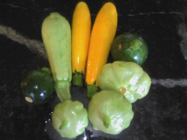 Eight Ball, Cousa, Golden Zucchini, Patty Pan summer squashes