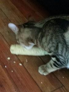 Apollo's first corn