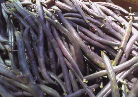 Purple beans..taste like the green ones but don't cook them for too long ;)