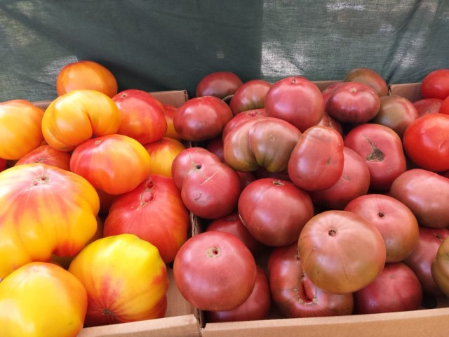 tomatogermancherokee (2) (Medium)