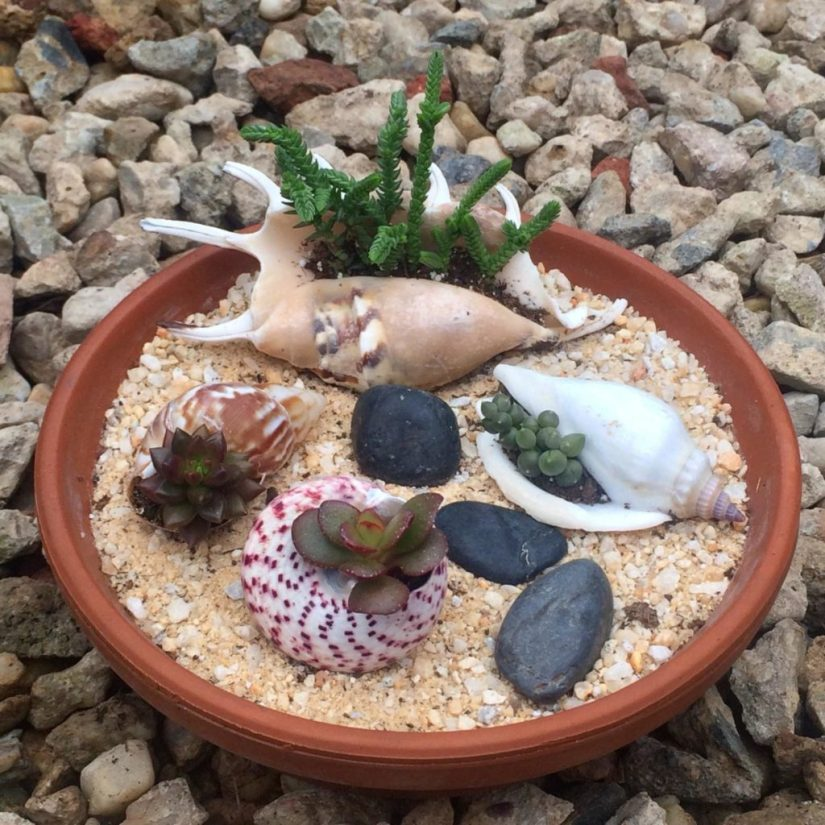Summer Craft Seashell Garden