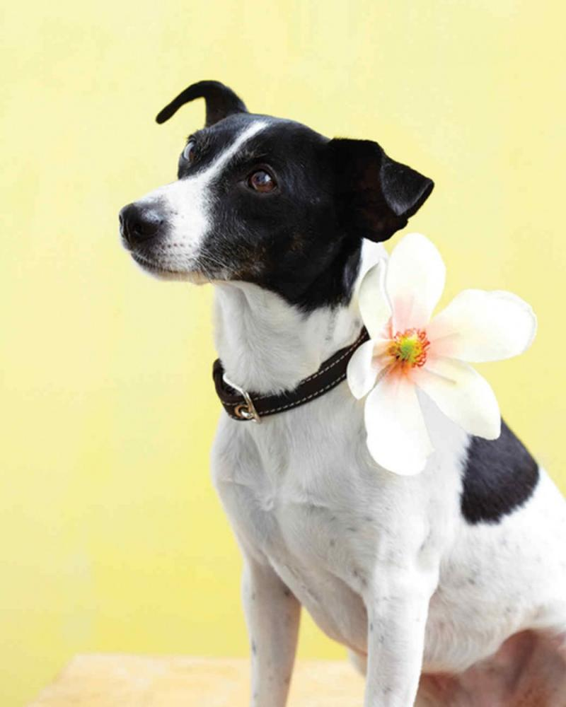 Crafts for Dogs Collar with Flower