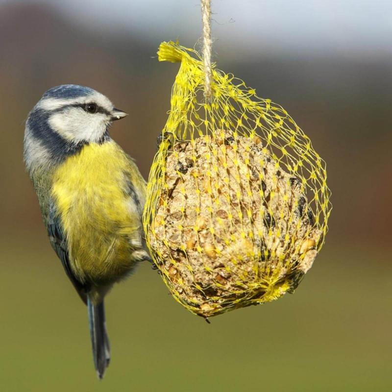 bird feeders chicago