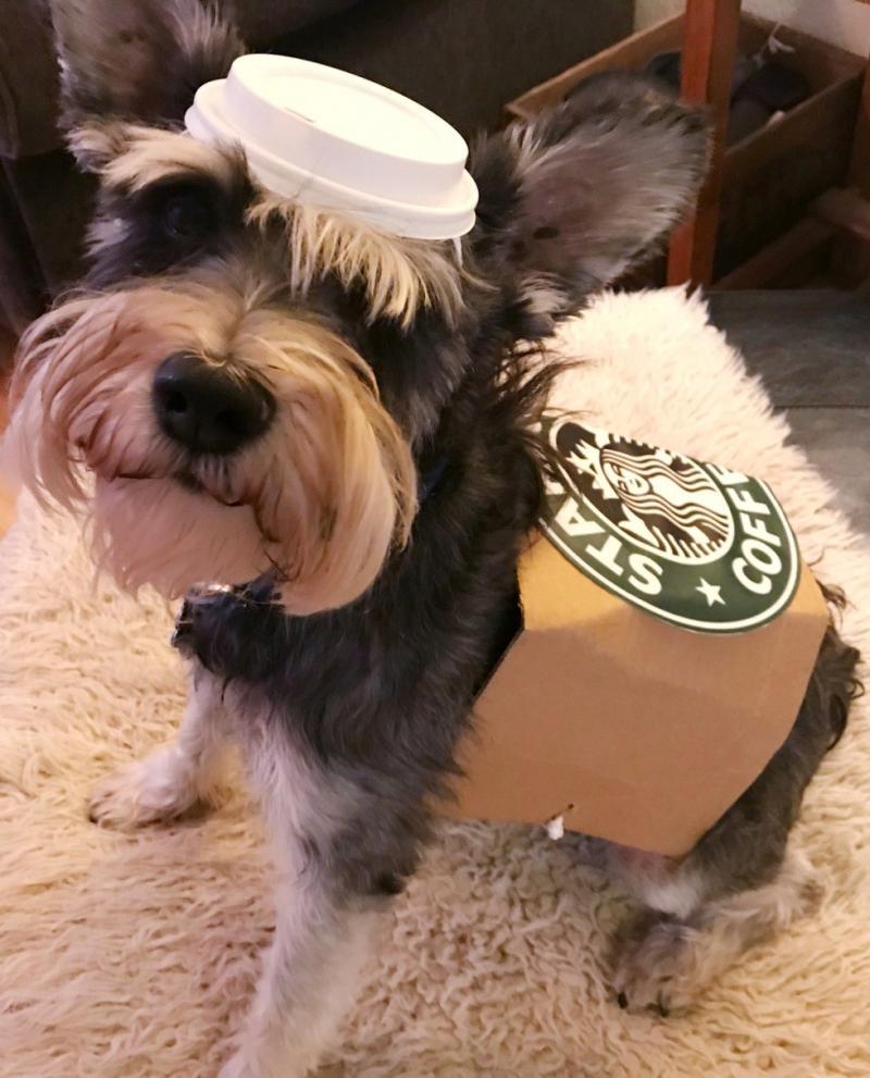 dog costumes b&m