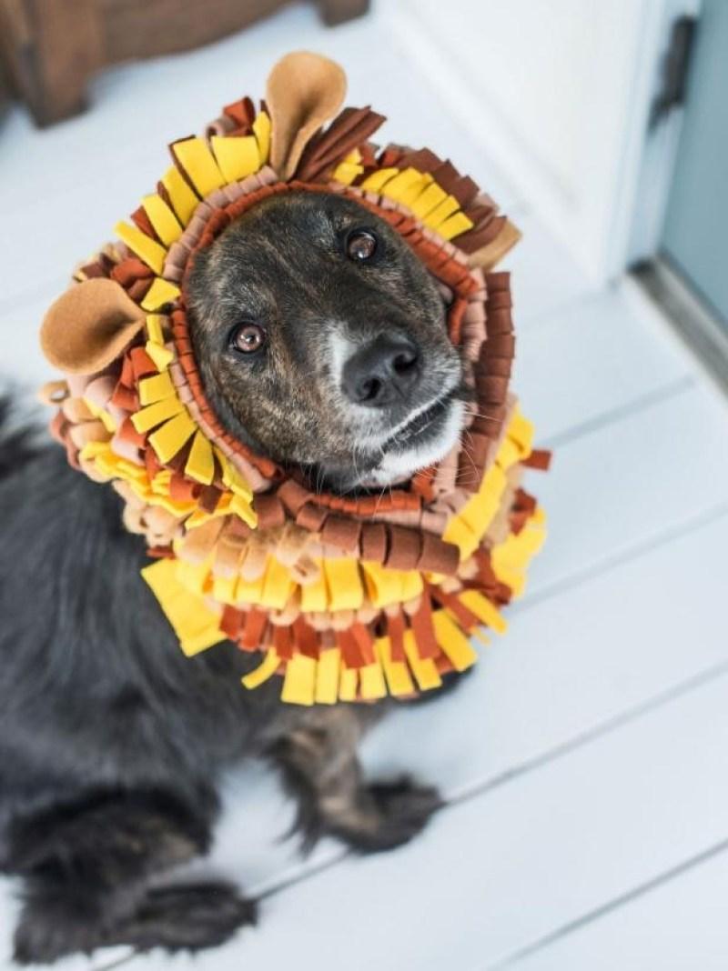 b&m bargains dog costumes
