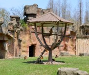 Golden Monkey enclosure