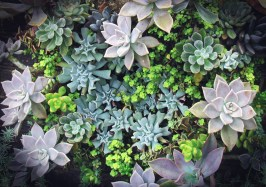 An Array of Succulents