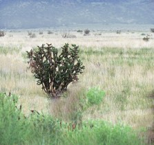 Cactus in New Mexico